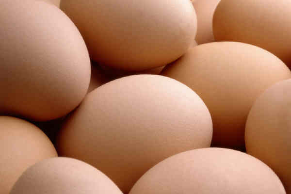 EGGS –  THE TRUTH IS :-